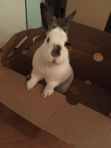 Moraea, in a box.